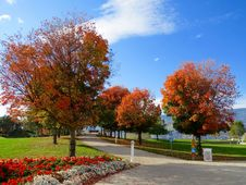 Free White Trash Bin Under Red Leaves Tree Stock Photos - 82950153