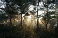 Free Sunlight In Forest Royalty Free Stock Photography - 82950507