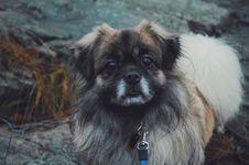 Free Dog On Leash Outdoors Stock Photos - 82950653