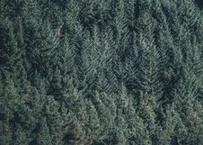 Free Aerial Photography Of Green Pine Trees Royalty Free Stock Images - 82950709