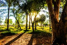 Free Sunshine Through Trees In Field Stock Photos - 82950763