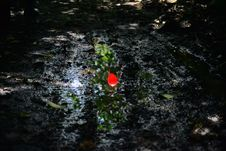 Free Red Flower In Mud Stock Images - 82950774