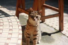 Free Brown Tabby Cat Sitting On Concrete Floor During Daytime Royalty Free Stock Photography - 82950927