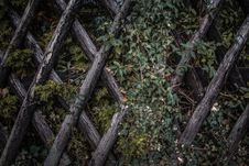 Free Ivy On Wood Lattice Fence Royalty Free Stock Image - 82950976