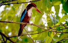 Free Tropical Bird In Tree Stock Photo - 82950990