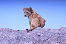 Free Brown Black And Gray Lioness Sitting On Gray Concrete Platform During Daytime Stock Photo - 82951040