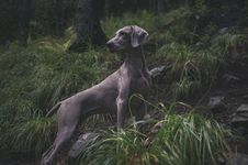 Free Dog In Green Grasses Stock Photo - 82951060