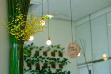Free Indoor Plants Stock Images - 82951144