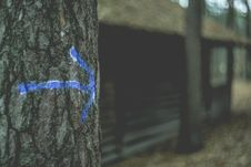 Free Blue Arrow On Tree Royalty Free Stock Images - 82951429