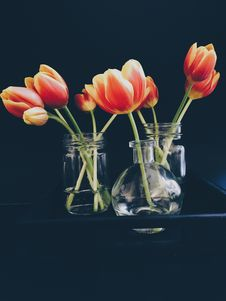Free Red And Yellow Tulips In Clear Glass Jar And Vase Still Life Painting Royalty Free Stock Photo - 82951465