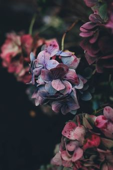 Free Purple Flowers On Stems Stock Photography - 82951722