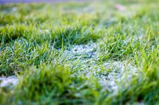 Free Frost On Grass Stock Images - 82951744