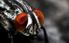 Free Close Up On Fly Eyes Stock Photos - 82952063