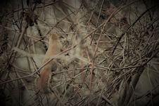Free Squirrel In Branches Royalty Free Stock Photo - 82952085