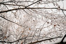 Free Frost And Ice On Branches Royalty Free Stock Images - 82952809