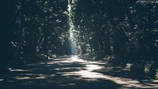 Free Tree Covered Road Stock Photo - 82952910