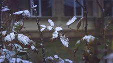 Free Close-up Of Snow On Plants During Winter Stock Photos - 82953103