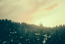 Free Pine Forest On Overcast Day Royalty Free Stock Photo - 82953235