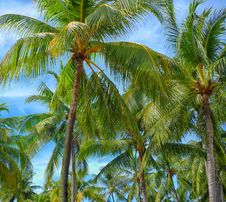 Free Green Palm Trees Under Blue Sky Stock Image - 82953971