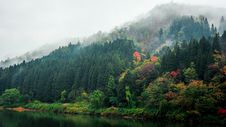 Free Autumn Trees On Banks With Fog Stock Photos - 82954053
