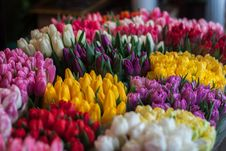 Free Close-up Of Multi Colored Tulips Royalty Free Stock Image - 82954186