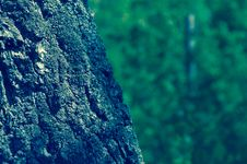 Free Close-up Of Tree Royalty Free Stock Photography - 82954447