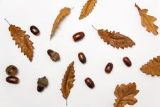 Free Close-up Of Autumn Leaves Over White Background Stock Images - 82954634