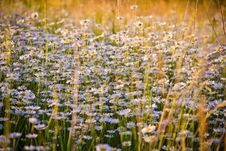 Free Close-up Of Flowers Growing In Field Stock Photo - 82954860