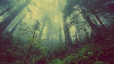 Free Fog In Forest Royalty Free Stock Photography - 82955007