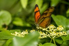 Free Orange Butterfly On Flowers Royalty Free Stock Photo - 82955065
