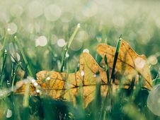 Free Leaf In Green Grass Royalty Free Stock Photo - 82955495