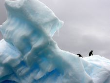 Free Penguins On Iceberg  Stock Images - 82955924