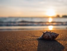 Free Shell On Beach At Sunset Royalty Free Stock Images - 82955949