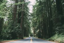 Free Road Between Green Trees Stock Photos - 82956113