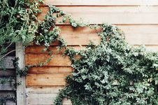 Free Ivy On Wood Fence Stock Photography - 82956402