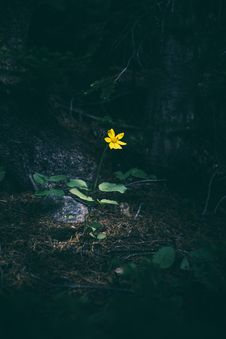 Free Yellow Flower In Woods Royalty Free Stock Photos - 82957128