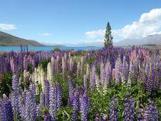 Free Purple Flowers In Meadow Stock Photos - 82957283