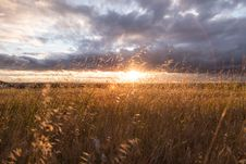 Free Grasses In Field At Sunset Royalty Free Stock Photos - 82957318