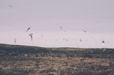 Free Seagulls Over Field Royalty Free Stock Image - 82957676