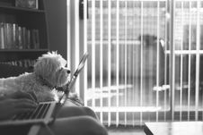 Free White Medium Size Dog Sitting On Couch Beside Person Using Laptop Grayscale Photo Stock Photos - 82957883