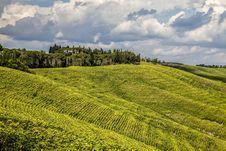 Free Green Vineyard On Hillside  Royalty Free Stock Image - 82958016