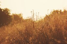 Free Grasses In Field Royalty Free Stock Image - 82958326
