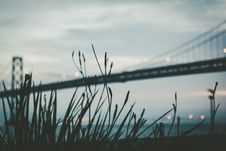 Free Grasses In Front Of Modern Suspension Bridge Stock Photos - 82958393