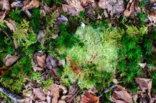 Free Dead Leaves On Green Grass Stock Images - 82958394