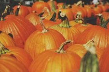 Free Field Of Pumpkins Royalty Free Stock Photos - 82958558
