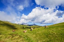 Free Cows In Green Fields Royalty Free Stock Photography - 82959057