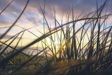 Free Sunset Through Sea Grass Stock Photos - 82959083