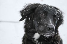 Free Portrait Of Dog In Snow Stock Images - 82959144