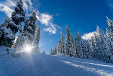 Free Snow Covered Hillside With Pines Stock Image - 82959201