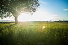 Free Sunny Country Field Stock Photo - 82959250